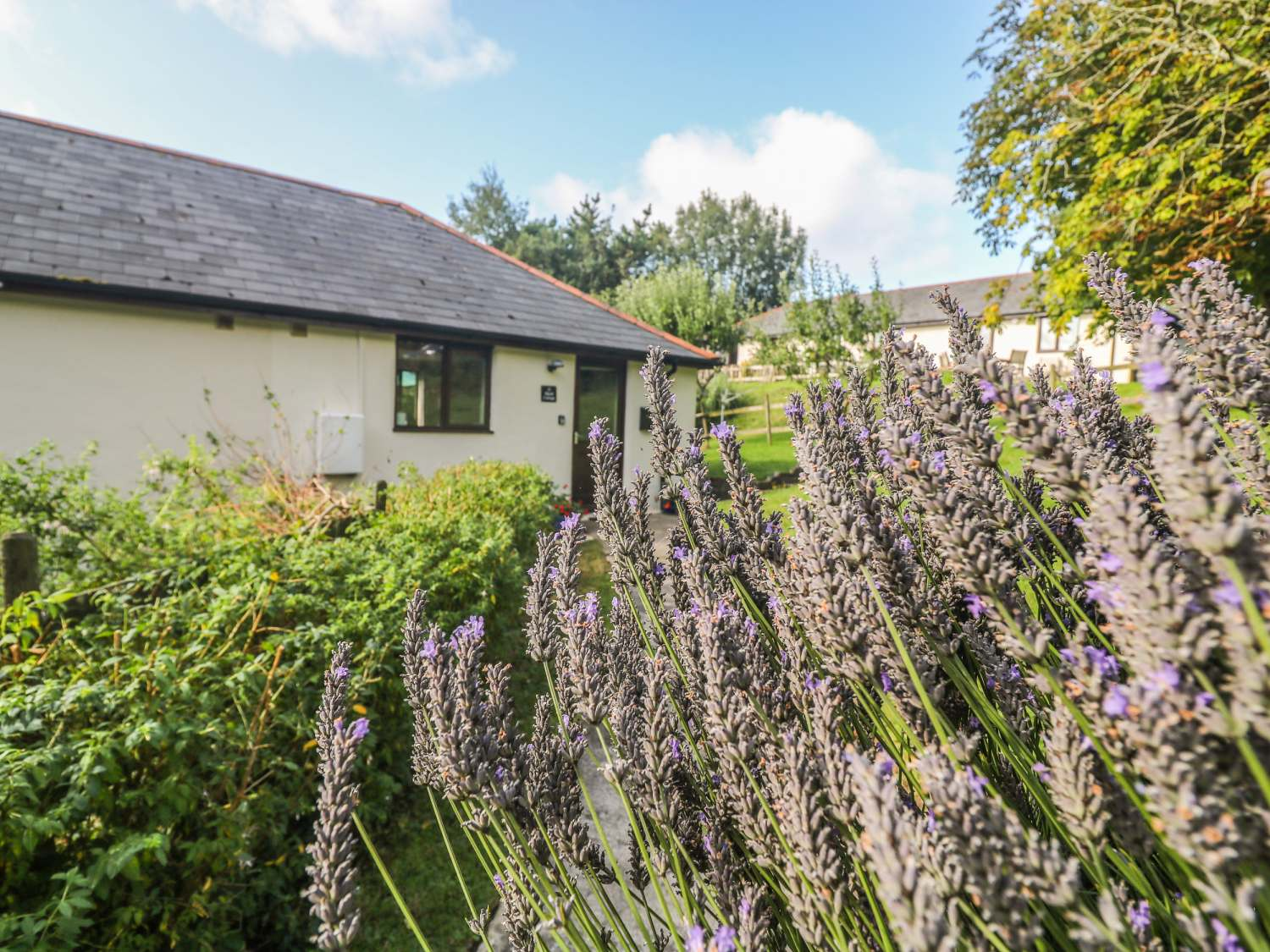 Hazel Cottage - Cornwall - 1007510 - photo 1