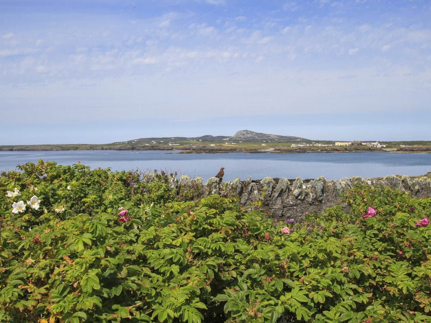 Ty Bychan - Anglesey - 1009073 - photo 1