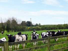 Elrove - County Wexford - 950042 - thumbnail photo 10
