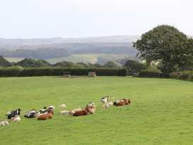 Woodland View - Cornwall - 959562 - thumbnail photo 35