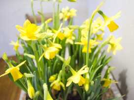 Smithy Cottage - Lake District - 973593 - thumbnail photo 6