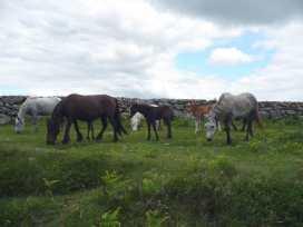 Bowbeer Barn - Devon - 975825 - thumbnail photo 20
