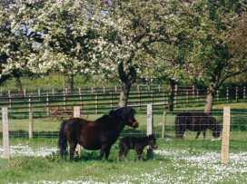 Quiet Corner Cottage - Somerset & Wiltshire - 975954 - thumbnail photo 13