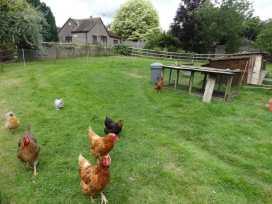 Quiet Corner Cottage - Somerset & Wiltshire - 975954 - thumbnail photo 15