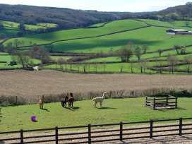 Hiscox Cottage - Devon - 976020 - thumbnail photo 5