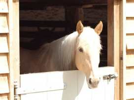 Boycombe Barn - Devon - 976029 - thumbnail photo 17