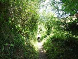 Two Acres - Cornwall - 976312 - thumbnail photo 14