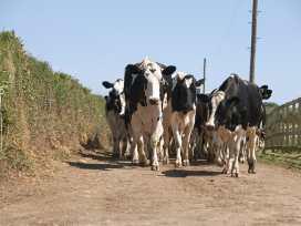 Treworgie - Cornwall - 976535 - thumbnail photo 12