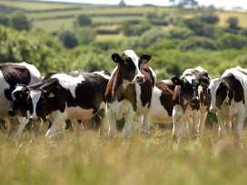 Treworgie - Cornwall - 976535 - thumbnail photo 13