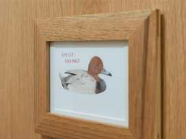 Pochard - Cotswolds - 988688 - thumbnail photo 11