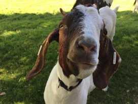 Hazelnut Barn - Cotswolds - 988714 - thumbnail photo 41