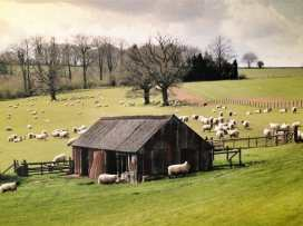 Walnut Barn - Cotswolds - 988735 - thumbnail photo 29