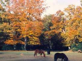 Russet - Dorset - 988894 - thumbnail photo 21