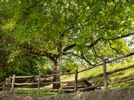 Middle Coombe Farm - Devon - 997047 - thumbnail photo 36