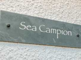 Sea Campion - Devon - 998671 - thumbnail photo 3