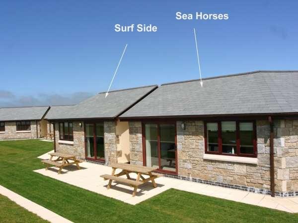 Sea Horses photo 1